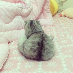 . 쿠키 궁뎅짝!. . 떡인가 고양인가. #고양이 #궁뎅이 #스코티쉬폴드 #집사 #cat #scotishfold #back #catstagram by tattooistyammy http://www.australiaunwrapped.com/