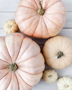 "historyinhighheels: ""Gourd, I love this holiday! Happy Halloween everyone 😊🎃 "" Cute Fall Wallpaper, Iphone Wallpaper Fall, Iphone Backgrounds, Iphone Wallpapers, Wallpaper Backgrounds, Cream Aesthetic, Autumn Aesthetic, Pink Pumpkins, Fall Pumpkins"