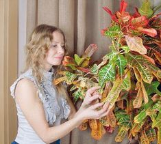 Crotons can grow quite leggy, and leaves may develop damage due to thrip feeding. Cutting back a croton can help you acquire a thicker bush or remove ugly leaves. Whatever the purpose, a few tips on croton pruning from this article will help. Bacterial Diseases, Short Plants, Indoor Plant Pots, New Growth, Water Plants, New Leaf, Early Spring, Houseplants, Perennials