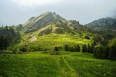 green landscape ~