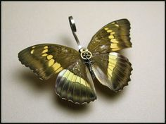 Nymphalidae: Bassarona Euthalia Thibetana Yannana