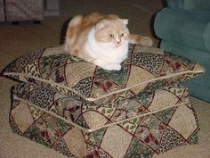 """This is Liam MacFold on the ottoman I made.  The frame is 2""""x4"""" on heavy duty casters, which we had on hand.  I bought the fabric (Safari) at Calico Corners (cost about 1/5th that of the Calico Corners ottoman).  I'm for hire.  :)"""