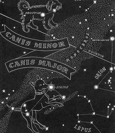 antique sirius constellation map - i like this style and how it would work with my current pleadies tattoo. the font and writing is where i'd honor all my pets Star Constellation Tattoo, Zodiac Constellations, Constellation Chart, Night Sky Stars, Night Skies, Large Dogs, Small Dogs, Star Chart, Galaxy Print