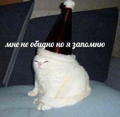 Funny School Memes, Memes Funny Faces, Stupid Funny Memes, Funny Relatable Memes, Memes Humor, Man Humor, Cat Memes, Russian Cat, Russian Memes