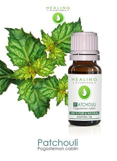 """Also known as: """"hippy juice"""" Patchouli/ Patchouly. The word derives from the Tamil Patchai means green, Ellai means Leaf"""