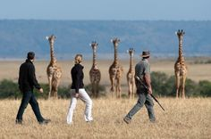 Explore our Kenya Safari Packages to Masai Mara via Rift Valley and enjoy your Safari tours in Kenya, book your Safari Packages to Kenya with All Tours Egypt and we grantee the prices and high quality services during your Safari tours in Kenya Kenya Travel, Africa Travel, Best Vacation Spots, Best Vacations, African Holidays, Safari Holidays, Out Of Africa, Kenya Africa, East Africa