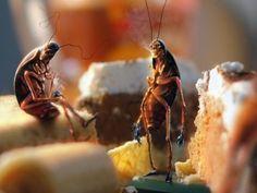 La mala vida de las Cucarachas