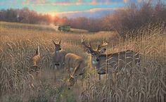 Harvest Time-Whitetail Deer by Michael Sieve WildWings