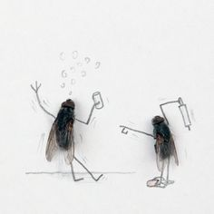 Funny Drunk Fly Image