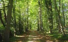 La Feria ExpoBiomasa dedicará un espacio al sector forestal #expobiomasa