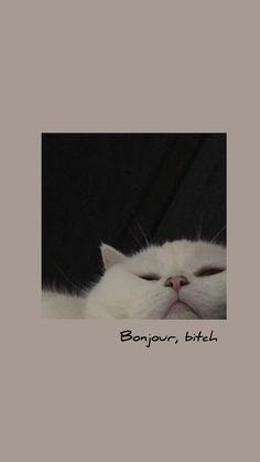Funny Cat Wallpaper, Cute Tumblr Wallpaper, Funny Phone Wallpaper, Mood Wallpaper, Iphone Wallpaper Tumblr Aesthetic, Bear Wallpaper, Iphone Background Wallpaper, Cute Disney Wallpaper, Kawaii Wallpaper