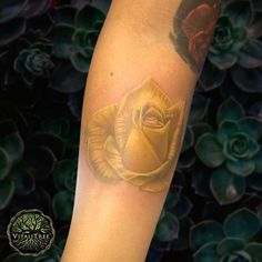 #RealisticTattoo simplicity and elegance all in one golden yellow rose. @ant_inks at @darkdaggertattoo in El Paso Texas wields the ultimate #FlowerPower.  That's a serious level of magic FWIW. #SkillsDrills  #yellowrosetattoo #flowertattoo #photorealism #forearmtattoo #neotrad #neotat #rosetattoos #floraltattoo #roses #roseart  #DontFlipOutFlipTheLid  #SalveItBeforeYouStabIt  #VitaliTreeTattoo  #RepublicTattooSupply @republictattoosupply #tattooreleaseformsapp @tattooreleaseformsapp…