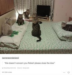 48 Of The Funniest Cats On The Internet                                                                                                                                                                                 More