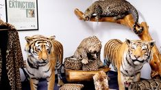 There are millions of creatures, flora and fauna stored at the National Wildlife Property Repository in Colorado