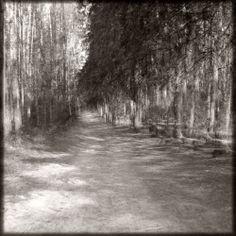Krocząc w bezruchu