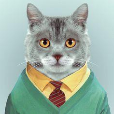 Blik Zoo Portraits: Cat - BL-YP-CAT-DECAL