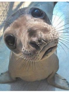 Aww this baby seal is just so adorable!!