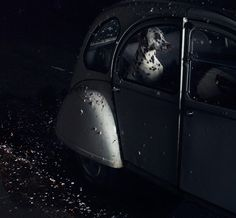 """Martin Usborne : """"MUTE: the silence of dogs in cars""""Series"""