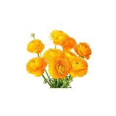 Orange Ranunculus Bulk Flower ❤ liked on Polyvore
