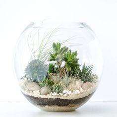 30-ideias-diferentes-de-terrarios-um-mini-jardim-perfeito-a26788.jpg