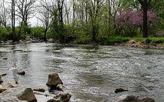 A walk along Spring Creek.
