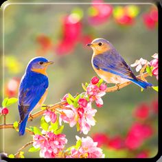 Ideas blue bird photography spring for 2019 Two Birds, Love Birds, Pretty Birds, Beautiful Birds, Pictures Images, Photos, Spring Wallpaper, Nature Wallpaper, Hd Wallpaper