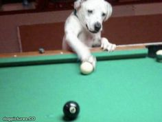 playing some pool
