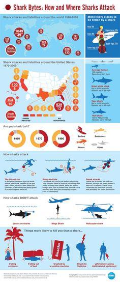 Como o tubarão ataca as pessoas. Você sabia!?