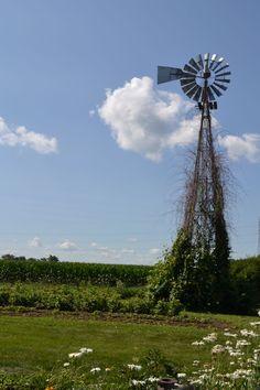 Windmill at the #JPParkerFlowers farm! #FlowerPower www.jpparkerco.com