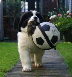 Need something bigger than a tennis ball lol