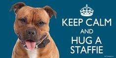"""Staffordshire Bull Terrier RED / Staffie / Staffy Gift - 'KEEP CALM' LARGE colourful 4"""" x 8"""" MAGNET - for indoor or outdoor use for your Fridge, Car, Caravan or use on any flat metal surface -Water proof and UV resistant. Keep Calm Magnets http://www.amazon.co.uk/dp/B017KZO2K6/ref=cm_sw_r_pi_dp_EjFswb1RK1R80"""