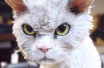 """「怒ってなどいなーい!」常に""""しかめっ面""""の猫。かわいい怒り顔に思わずキュン♡ 18枚"""