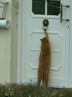 Anybody home?                                                     #catsfunny #funnycats #lolcats