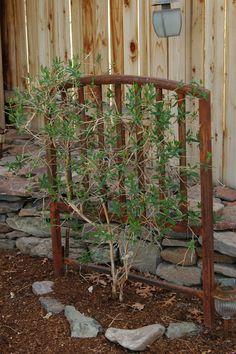 deborah jeans DANDELION HOUSE and GARDEN : Pickn Good Garden Art