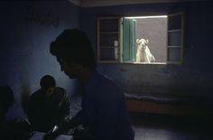 Alex Webb EGYPT. Cairo, 1980. Camel market. Magnum Photos Photographer Portfolio