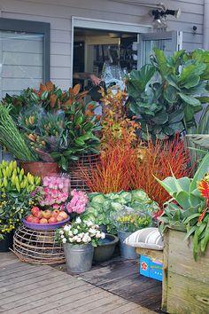 Presentation The Boathouse Cafe, Palm Beach, Sydney Dubai Garden, Rooftop Garden, Palm Beach Sydney, Cafe House, Beach Color, Palm Beach Gardens, Coastal Homes, Garden Pots, Organic Gardening