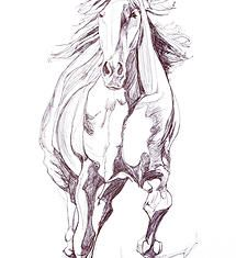 Yaheya Pasha equestrian artist