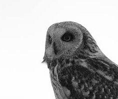 jordugle pattern by Siv-Helen Alterskjær Owl, Bird, Pattern, Animals, Design, Animales, Animaux, Owls, Birds