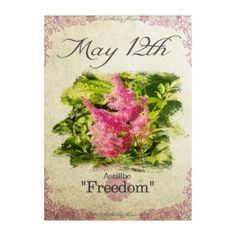 Birthday Flowers On May 12th Astillbe Acrylic Print