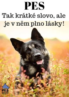 English Words, English Quotes, Pet Dogs, Pets, Belgian Malinois, Bff, Animals, Heart, Food