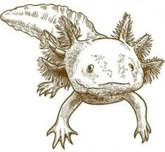 axolotl in danger of extinction Character Sketches, Character Illustration, Character Design, Simple Wolf Tattoo, Cute Drawings, Drawing Faces, Axolotl Cute, Person Drawing, Underwater Creatures