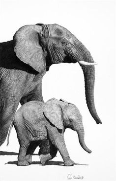 Elephant drawing by Clive Meredith Elephant Canvas, Elephant Love, Elephant Photography, Animal Photography, African Elephant, African Animals, Elephant Afrique, Animals Black And White, Elephants Photos