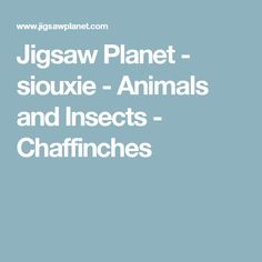 Jigsaw Planet - siouxie - Animals and Insects - Chaffinches