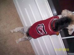 """my Yorkie says """"where them Clemson Tigers at?"""""""