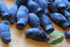 Kék mézbogyó Garden Plants, Gardening, Furniture, Lawn And Garden, Urban Homesteading, Horticulture