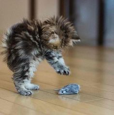 Ten Adorable Fuzzy Wuzzy Kitties - http://www.kittenswhiskers.com/ten-adorable-fuzzy-wuzzy-kitties/