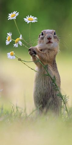 Will you make me the happiest squirrel in the world and be my forever mate? European Ground Squirrel - title A Handful of Flowers Nature Animals, Animals And Pets, Baby Animals, Funny Animals, Cute Animals, Nature Nature, Flowers Nature, Art Flowers, Flowers Garden