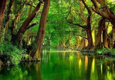 Awesome Beauty of Trees and Water(Nature Wallpaper)