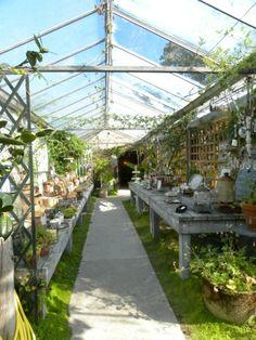 @The Glass House Cafe Bar & Tea Room Stunning garden cafe - amazing for a shoot! Mx