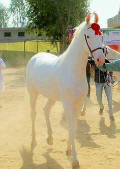 White Beauty http://ift.tt/2gOWVSp